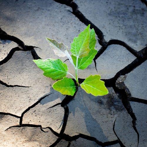 Rebounding from career setbacks